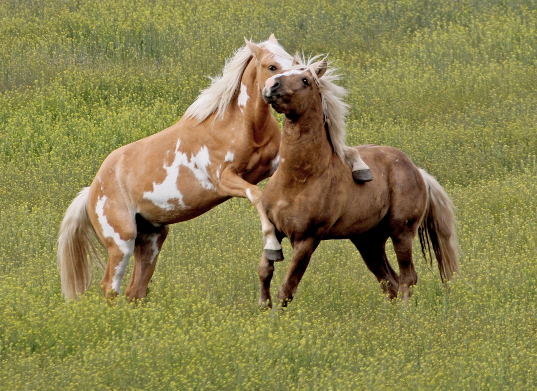 Wild Horses Of Southeast Oregon Nature Photography