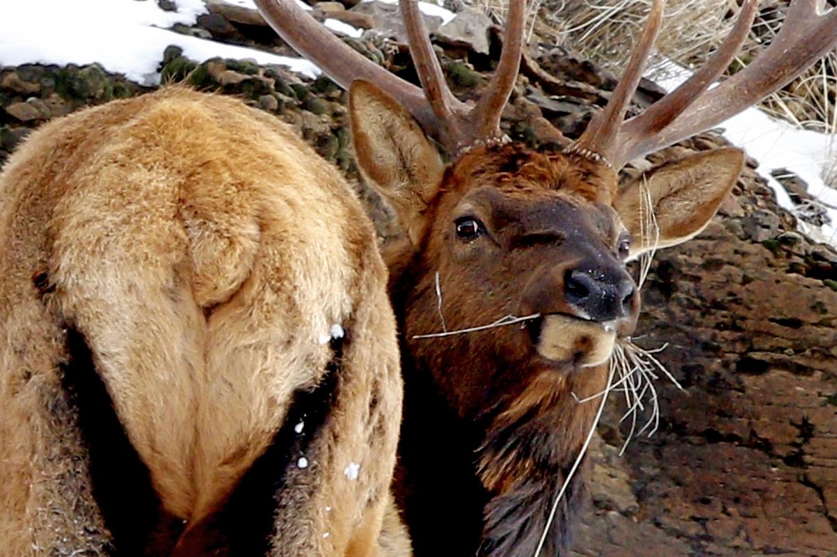 Winter Wildlife Photog...